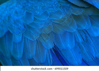 Parrot feather backgrouds