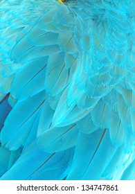 Parrot feathers, Blue macaw parrot feathers,  exotic texture