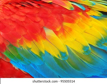 Parrot feathers, red and blue exotic texture