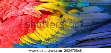 Parrot feathers, red, yellow and blue exotic texture