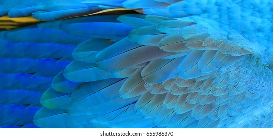 Parrot feathers yellow and blue exotic texture.