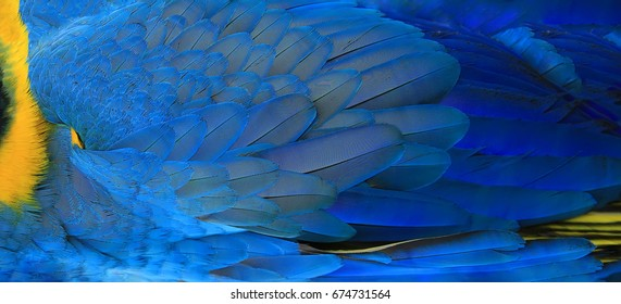 Parrot feathers yellow and blue exotic texture