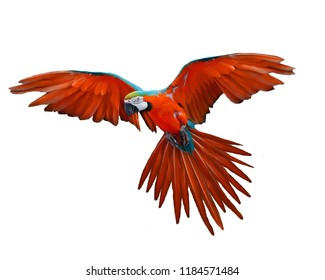 Parrot flying red photo image wallpaper