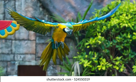 Parrot, flying, wing stretched