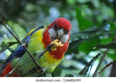 Parrot having lunch