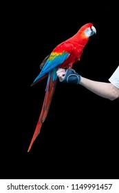 Parrot holding on hand during training course