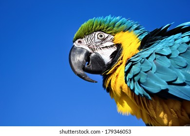 Parrot isolated on blue