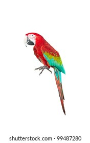 A parrot, isolated on white background