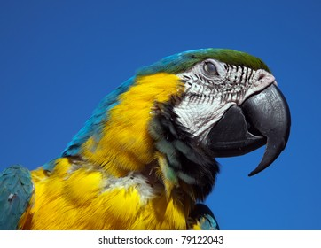 A parrot macaw against the blue sky