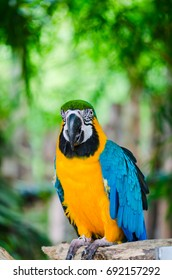 Parrot Macaw in the nature.