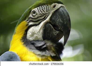 Parrot at Miami Zoo