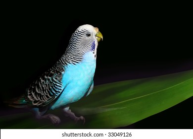 Parrot on a black background with a green leaf