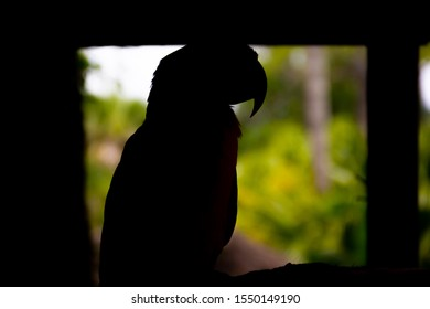 Parrot Outline sitting in the Silhouette