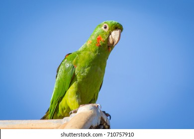 Parrot over the roof