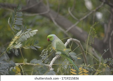 parrot perched on a tree branch closeup , isolated