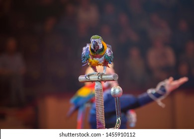 Parrot performs in a circus against the backdrop of the audience