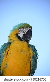 A Parrot in a Persian hotel