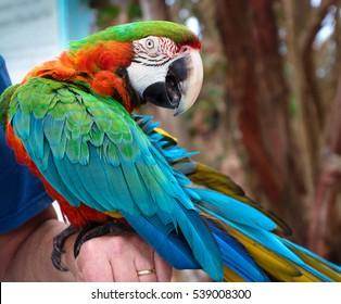 parrot playing peek-a-boo
