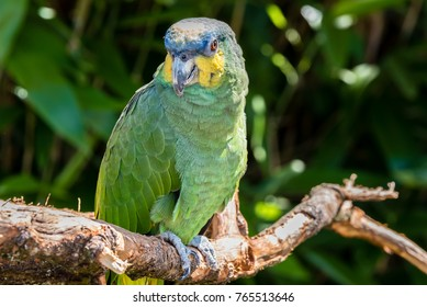 parrot posing on the tree branch