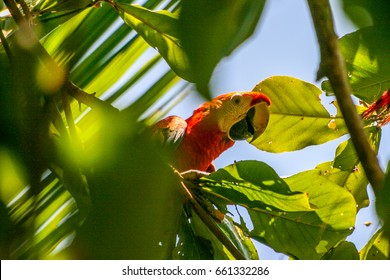 Parrot in the rainforest of Costa Rica