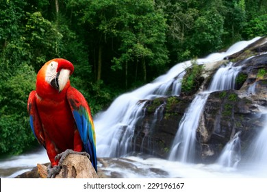 Parrot in the rainforest with a waterfall.