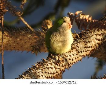 Parrot resting on a spikey branch enjoying the sunlight.