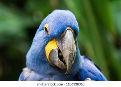 A parrot sight