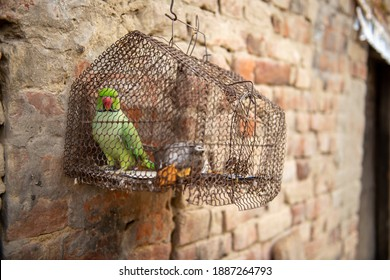 A parrot sitting calmly in a cage hung on a decrepit wall.