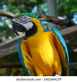 parrot sitting on a branch of color