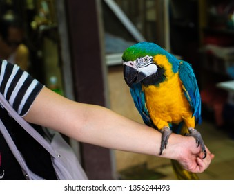 Parrot sitting on his hand closeup photo