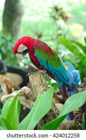 The parrot stand on the branch