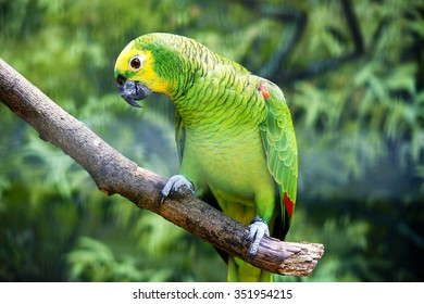 Parrot standing on a branch