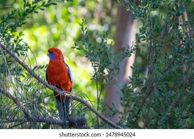 A parrot standing on branch of tree
