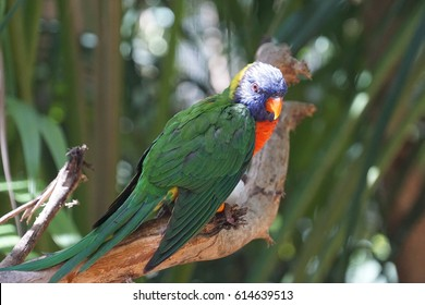 Parrot in Tenerife