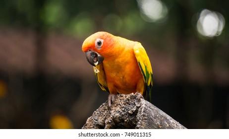 parrot in thailand