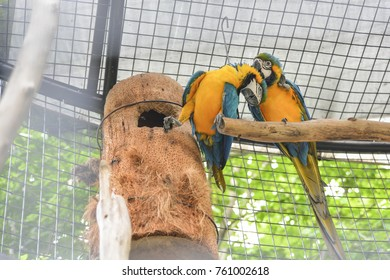parrot dating