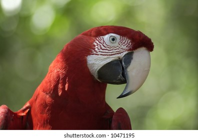 Parrot Upclose