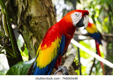 parrot in the zoo