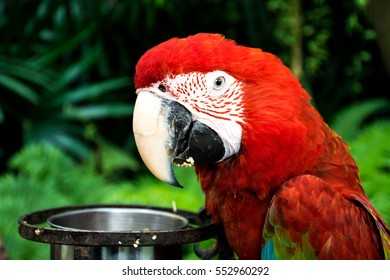 Parrot at zoo in Thailand