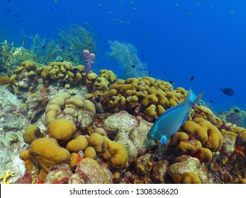 Parrotfish and colorful underwater reef. Paradsie seascape with swimming fish, corals and blue sea water. Snorkeling on the reef with fish.