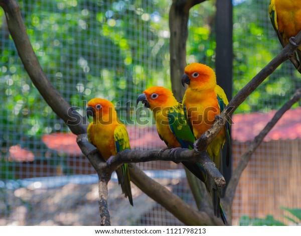 Parrots is beautiful