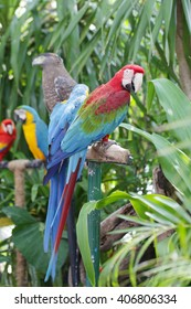 The parrots bird colorful blue macaw sitting on the perch.