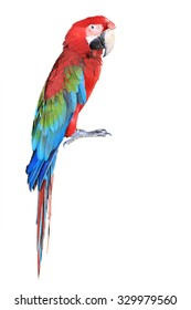 The parrots bird colorful red macaw sitting on the perch isolated on white background. This has clipping path.