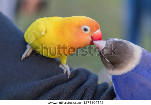Parrots Birds Hookworm English Parrot One Stock Photo (Edit