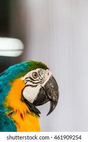 Parrot's core