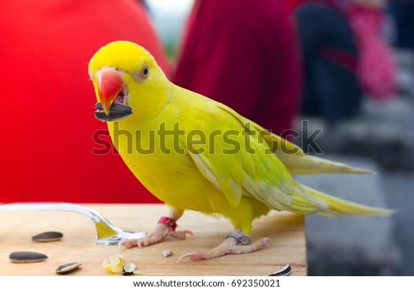 Parrots eat