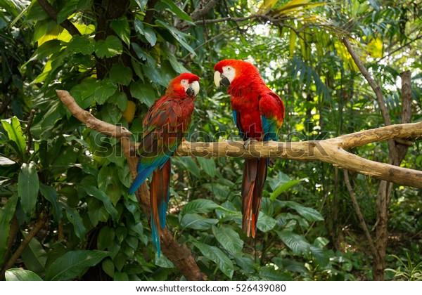 Parrots - Jungle Island, Miami, Florida.