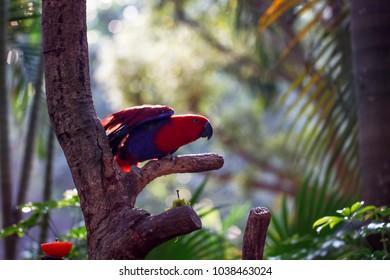 Parrots kept in the zoo
