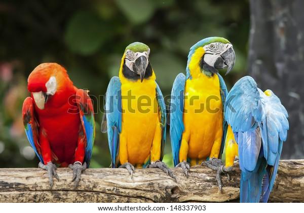 Parrots in the Park, Thailand.