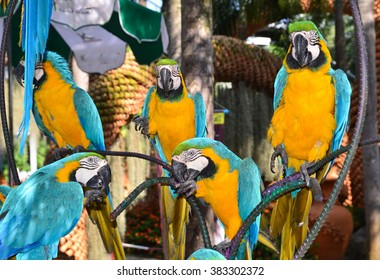 Parrots, parrot macaw on branch, botanical garden Nong Nooch, Thailand, blue and yellow birds